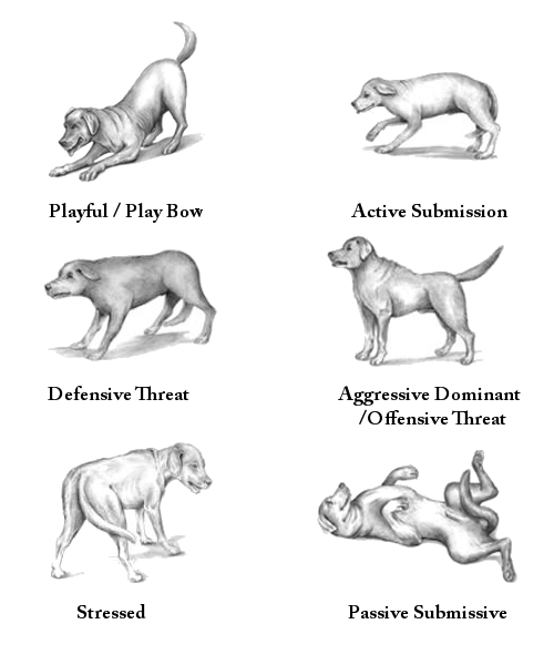 dog posture diagrams